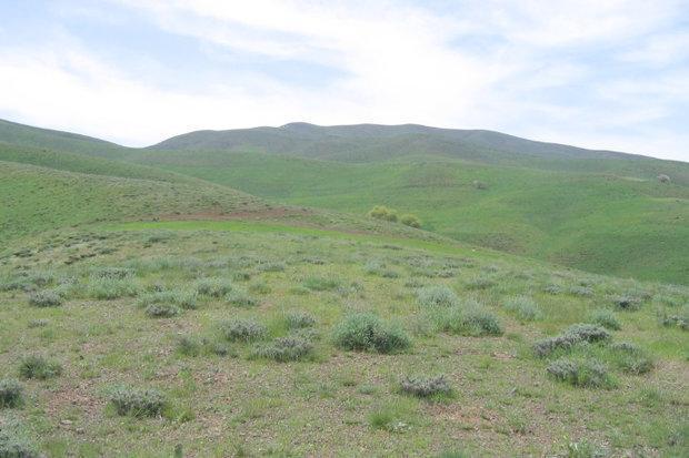 706 هزار هکتار اراضی ملی دامغان زیرپوشش طرح کاداستر قرار می گیرد