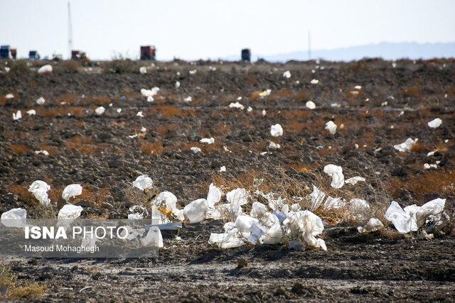 زندگی تعفن برانگیز در میان زباله های مهاباد