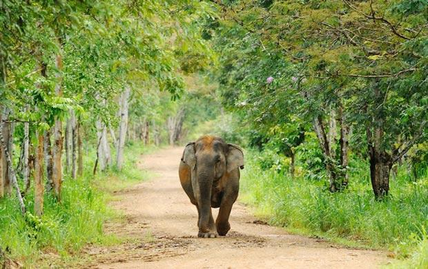 لیست پارک های ملی تایلند برای دیدن