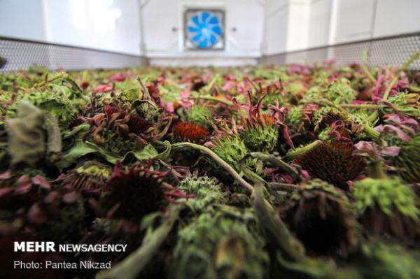 شرکتهای دانش بنیان حوزه گیاهان دارویی به سوریه می فرایند